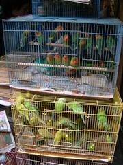 china hk hongkong birdcages petbirds goldenmile songbirds yuenpostreet livepets traditionalchinesemarket hkstreetmarket tsimtsatsuidistrictkowloon kowlooncommercialdistrict birdmarketkowloon aviaryequipment