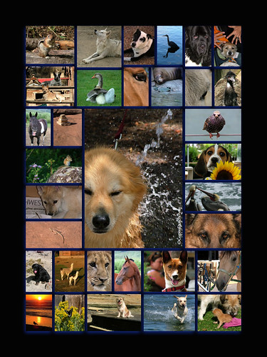 Animals...A Day-At-The-Spa Collage
