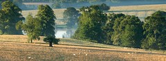 Grazing sheep (icimages76) Tags: morning mist lake sunrise landscape dawn sheep northamptonshire panoramic farmland september grazing fawsley