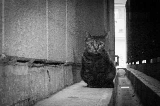 Today's Cat@2012-09-11