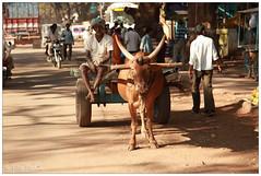 IMG_9916.jpg (f.slezak) Tags: travel people india face asia village karnataka hindu hinduism hindi badami southindia indiansubcontinent