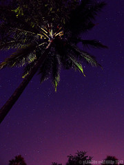 DSC05390 - Starry nights are back! (Gladson777) Tags: sky india tree night stars photography purple coconut outdoor sony astro clear starry dsc vasai naigaon hx100v