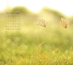 September Calendar (Faisal | Photography) Tags: morning flowers sun white green garden eos soft dof bokeh good 14 usm 50 tones ef ef50mmf14usm 50d canoneos50d septembercalendar faisal|photography فيصلالعلي