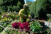My Sweet Gardener at Regent's Park! (picaddict) Tags: uk flowers london sunny september wateringcan regentspark wateringpot giesskanne plantgardener gardenersart