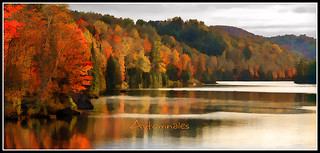 automnales (fall color competition)