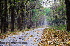 Buxa Tiger reserve (Mithun Kundu) Tags: park india west fall leave leaves dawn golden leaf national jungle fallen leafs bengal goldenleaves gorumara dooars jaldapara abigfave