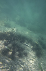 DSC09200 (andrewlorenzlong) Tags: fish coral thailand snorkeling kohchang kohrang kohrangyai korangyai