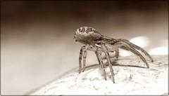 spider 10-2012 (5)