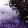 Schiedam pond (autumn) (fransje 2103) Tags: blue autumn water reflections square october flickr bleu reflets bluegreen schiedam carre mfcc 500x500 morheen