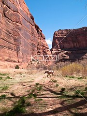distant image of a animal by cliff (hananature8877) Tags: shadow arizona horse cliff usa sunlight southwest nature animal rock outdoors photography nationalpark beige day desert bright wildlife hill scenic dry sunny nobody nopeople canyon heat geology navajoland barren tranquil nationalmonument wildhorse rockformation tranquilscene animalsinthewild oneanimal rocklayers colorimage navajonation nonurbanscene extremeterrain aridclimate distantview physicalgeography animaltheme ancientdwelling