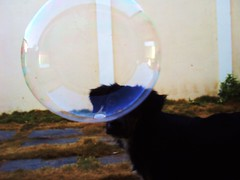 Arco-iris redondo (G PSampaio) Tags: love animal de happy bubble bolha sabao