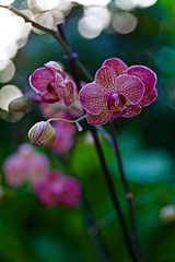 Orchidea (Fabrizio Reali (Fabri93)) Tags: orchidea flower flowers flickr flora photo canon nature shot light macro natura