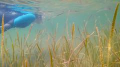 KIMG0017.jpg (d3_plus) Tags:  drive fish  apnea izu sea smartphone j4  underwater   watersports hokurikuregion android  japan notojimaisland dolphin kyocera scenery torqueg02   au skindiving       snorkeling seaofjapan dolphinswim fishingport diving   marinesports kyv35  ishikawapref  sky   port