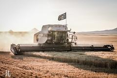 IMG_8399 (larzz4444) Tags: chester montana winterwheat chestermontana gleaner drylandfarming sweatgrasshills joplinmontana wheatharvest sunset