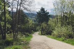 The Forest walk (- m i l i e d e l -) Tags: 2016 april avril emiliedelmond france lubron miliedel photographe photographer photography adventure explore nikon nikonfr photo printemps somewhere spring wander
