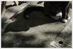 shadow cat (Wanderfull1) Tags: kit shadow cat