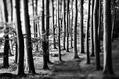 Trees (hansekiki ) Tags: rgen jasmund nationalpark trees baum bume landschaften squeezerlens canon 5dmarkiii sw
