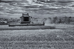 Nearly done! (David Feuerhelm) Tags: nikkor blackandwhite contrast field farm farming agriculture harvesting combine harvest bw infrared essex england nikon d90