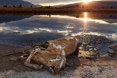 Reflections (Radisa Zivkovic) Tags: corpse sun death lake sunset environment water reflection ground nature outdoor cloud mountain tree dirt shore mammal body creature skull bone rib negligence ugly landscape backlight
