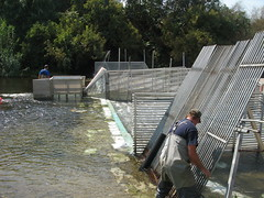 Installing a Fish Counting Weir