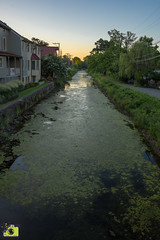 Canal-New Hope, Pa (MNixonPhoto) Tags: newhope pa pen canal sunset green water summer algae pennsylvania
