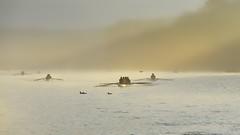 Serene (Marie.L.Manzor) Tags: morning sunrise 2016 lake water backlight mist fog boats birds silhouette sun landscape seascape nikon nikon610 nikkor marielmanzor mood atmosphre light 1000favs 1000favorites