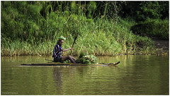 Traditional Papyrus Boat on Lake Tana (Luc V. de Zeeuw) Tags: boat ethiopia man papyrus rowing traditional trees water bahirdar amhara