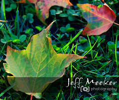 Early kiss of fall! (Jeff Meeker) Tags: fall fallcolor green orange yellow purple sunlight shadow allthingsmichigan americathebeautiful absolutemichigan artistic canon canont4i canondslr canon650d colorful countryroads daylight explore exploremichigan evening groupswithexperience interesting kalamazoocounty michigan michigangottaluvit midwest michiganisamazing mapleleaves maple nature naturespaintbrush outdoorbeauty outdoorphotography outdoorphotos outdoorphotographer outdoors puremichigan photographersofwestmichigan peaceful southwestmichigan schoolcraft thisisourmichigan themichigangallery theworldoutdoors trees westmichigan