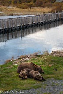 Bears Sleeping Bridge Crossing
