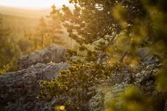 spidersweb (torivonglory) Tags: lapland lappland lappi landscape landschaft finland finnland midsummer midnightsun summer sommer sonnenuntergang sunset sunny nationalpark alivingdog canon canon6d 6d