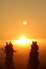 Sunrise in the vines (jakoboberle) Tags: sunrise sunset sonnenuntergang vines reben landscape landschaft blackforest schwarzwald germany deutschland german deutsch sky himmel orange evening abend summer sommer fall herbst