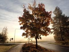 Olympus tg-4 Finland (tommikv) Tags: auringonnousu syksy autumn finland fog mist sunrise olympustg4