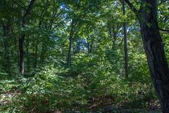 Brooklyn Botanic Garden 2016-09 (aloucha) Tags: d90 nikon plants botanicgarden brooklynbotanicgarden 2016 fall september brooklyn nyc newyorkcity outdoors park garden autumn plantsflowers newyork bbg bklyn