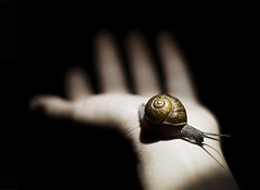 Snail (Omalix) Tags: light texture animal contrast dark 50mm hand shell snail slime chiaroscuro caracol slimy claroscuro