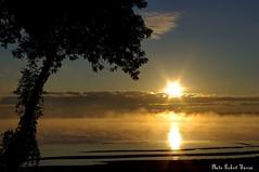 Lever de soleil dans le brouillard matinal.../Sunrise in the morning fog... (Pentax_clic) Tags: summer sun tree fog soleil pentax quebec september t arbre septembre brouillard kx vaudreuil