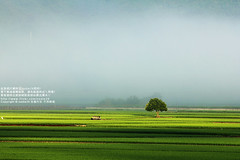 (nodie26) Tags: sky sun field tour rice paddy farm taiwan