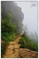 Into the clouds (Frank Kehren) Tags: fog canon unitedstates hiking tennessee trail f71 smokymountains 24105 greatsmokymountainsnationalpark gsmnp canonef24105mmf4lis ef24105mmf4lisusm canoneos5dmarkii