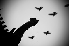 STRANGE DAY (Aurlien Buttin) Tags: france birds canon nude blackwhite raw gargoyle explore rouen 550d 5dii unsharpe