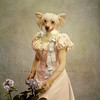 The little princess (Martine Roch) Tags: portrait dog pet cute animal lady photoshop square chinese adorable surreal photomontage martineroch flypapertextures