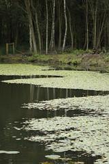 Meresands Wood (Rovers number 9) Tags: uk trees summer england tree water minolta wildlife lancashire september rufford 2012 meresandswood a65 minoltaaf100200f45 sonya65 sep2012