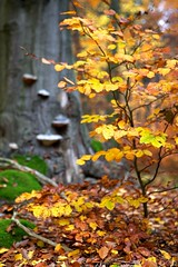 Beech still life (Jirka Chomat) Tags: autumn tree green leaves les forest moss czech autumncolors czechrepublic bohemia strom beech mech buk podzim zelen listy autumnlandscape vodradskbuiny podzimnbarvy podzimnkrajina beechvodradsk