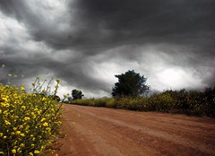 Circumstances / Circunstancias (Claudio.Ar) Tags: flowers light sky storm santafe color nature argentina clouds topf50 day shadows sony cielo nubes fields dsc h9 claudioar claudiomufarrege