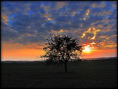 le paradis de mes rves ... (soeurette 67) Tags: soleil bleu ciel nuages arbre coucherdesoleil