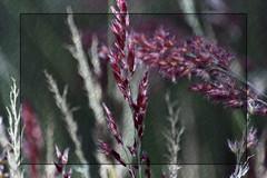 ... (Lisa Plymell) Tags: flower color green nature closeup nikon framed nikkor flowercloseup amature 55300 mygearandme nikond3100