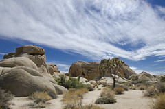The Joshua Tree Remix (Pete foley) Tags: california sky desert heat joshuatreenationalpark naturepoetry