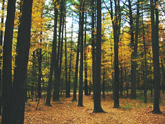 (ohpapercut) Tags: tree fall wisconsin forest woods october reserve        schmeeckle uwsp  ohpapercut