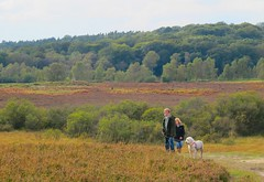 Between a Bog and a High Place (hapsnaps) Tags: autumn trees people dog brown green walks view heather hampshire bracken bog newforest 2012 newforestnationalpark bishopsdyke hapsnaps pigbushwood