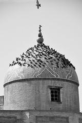 Landing Pad (Le*Gluon) Tags: roof bird pigeon mosque dome tajikistan landed khujand d90 tadjikistan tamron18270