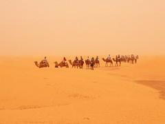 The Sahara near Ksar Ghilane (   ) (twiga_swala) Tags:       kebili governorate gouvernorat tunisie  sahara erg sand dune sea landscape scenery kbili   arabian camel dromedary excursion tourist   ksar ghilane