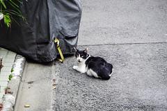 Today's Cat@2016-07-25 (masatsu) Tags: cat catspotting thebiggestgroupwithonlycats pentax mx1